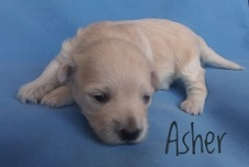 Asher.250