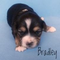 Bradley.250