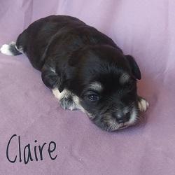 Claire.250