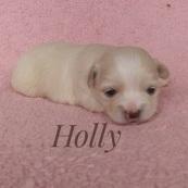 Holly250
