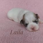 Laila250