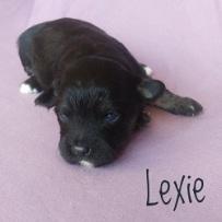 Lexie.250