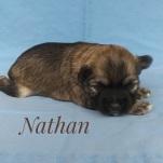 Nathan250