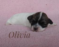Olivia250