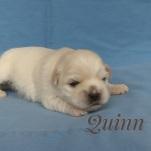 Quinn250