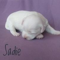 Sadie.250