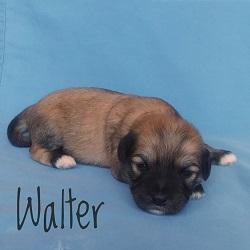 Walter.250