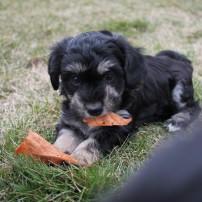 Teddy (Charley)